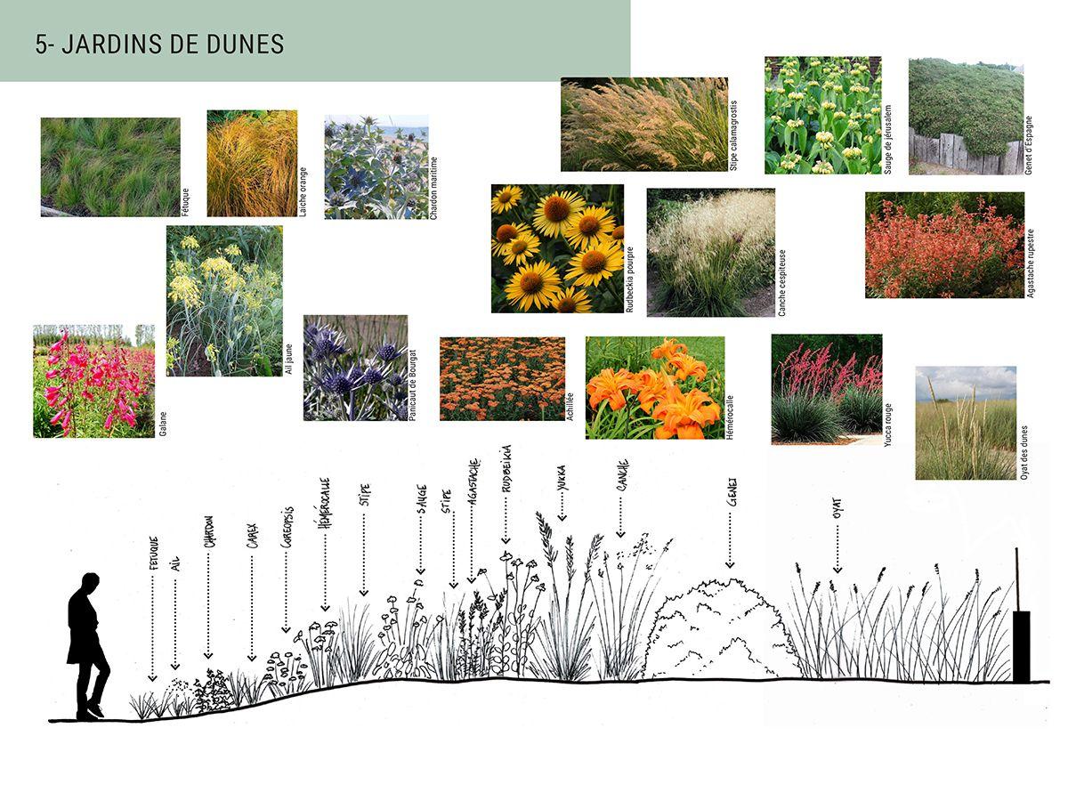 Atelier INEX - Notice paysage Jardins de dunes