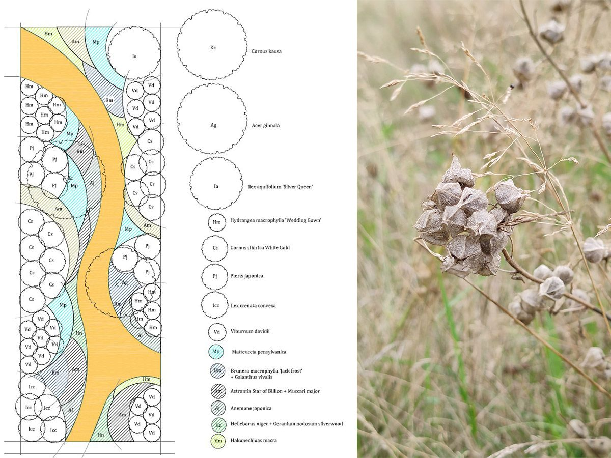 Atelier INEX, Plan plantations jardin Lamballe Armor